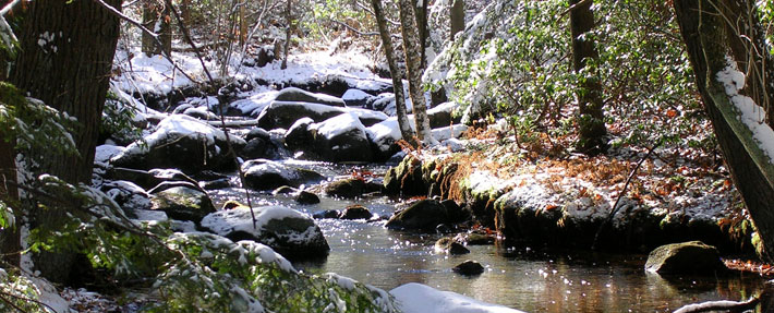 Pearl Brook – Photo by Joan Wotkowicz