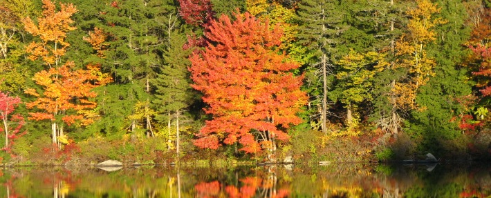 Fall along the Nashua River - Photo by Nancy Ohringer