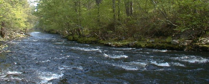 Squannacook River Rapids - NRWA Archives
