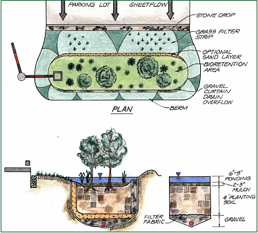 Rain garden bio-retention system plan and elevation views - Graphic by Stella Lensing